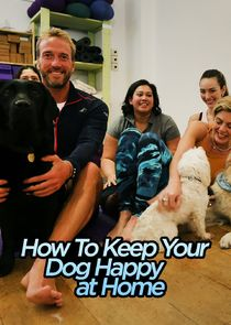 How to Keep Your Dog Happy at Home